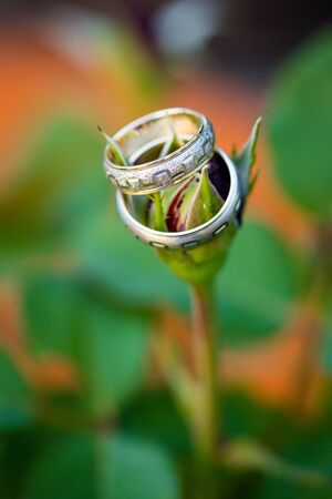 Two wedding rings on closed flower. Close up macro