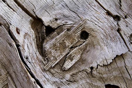Old rustic wooden texture on the door