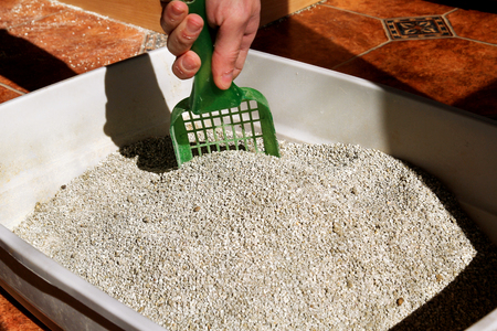cleanliness: Cleaning cat litter box. Hand is cleaning of cat litter box with green spatula. Toilet cat cleaning sand cat. Stock Photo