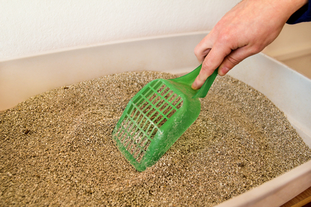 Cleaning cat litter box. Hand is cleaning of cat litter box with green spatula. Toilet cat cleaning sand cat.Cleaning cat excrement. Hand holding plastic shovel removing cat poop. Stock Photo