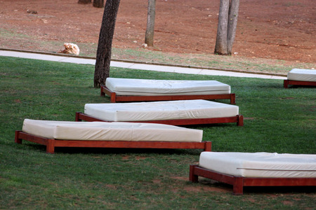 Comfortable white sun beds for sunbathing on grass, relax in tropical garden of luxury resort hotel.