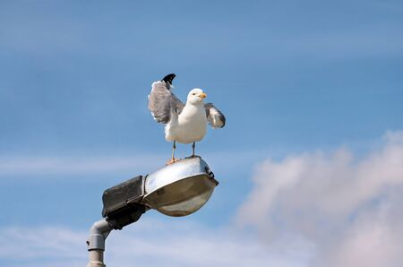 Portrait of single seagull