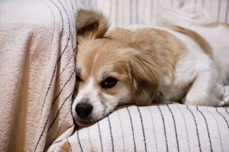 Portrait of sweet little mixed breed dog on bed