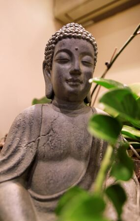 Figure and statue of Buddha in interior of apartment with green plants and indoors tree in room.