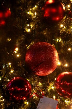 Traditional decorated baubles hangs on green twigs tree of pine. Bright red balls on Christmas tree of fir or spruce with string rice lights bulbs. Ornaments to christmas celebration, holiday scene.