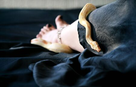 Woman leg with snake. Boa constrictor albino slithers on female foot and leg with beauty jewelry, bracelet. Non poisonous snake crawls across black cover bed. Exotic cold blooded reptile. Pet concept.