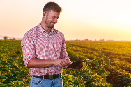 Young farmer in filed holding tablet in his hands and examining soybean corp. 写真素材