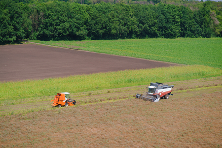 helianthus: Harvester on the field cleaning