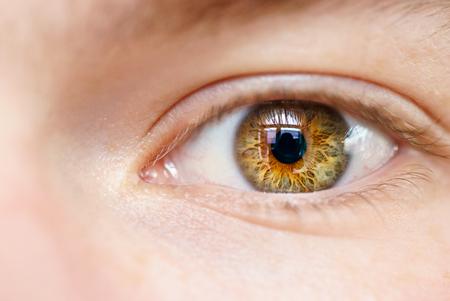 eye ball: brown eye macro