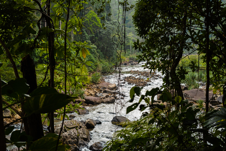 River in Sinharaja forest national park - Sri Lanka Stok Fotoğraf