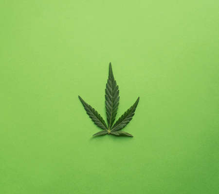 green cannabis leaf on green background Foto de archivo