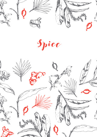 Vector background with herbs and spices. Illustration of plant natural organic comdiment. Herbal black and white design with red accent