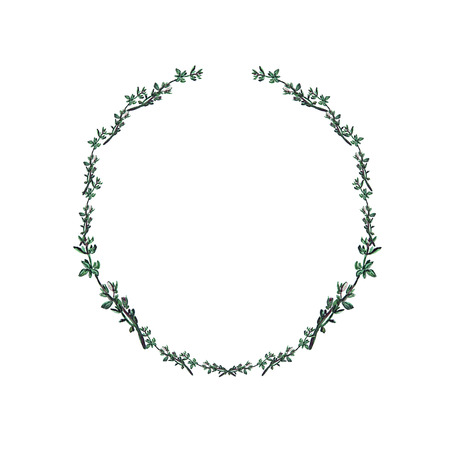 Watercolor wreath with thyme. Seasoning herb