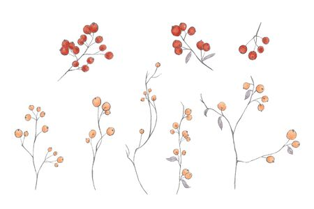 Collection of hand drawn floral branches, leaves, berries. Pencil drawing, digital painting style. Gray, orange, red colors.