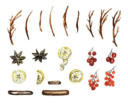 Watercolor collection of branches and spices. Wooden spruces, lemon, berries, vanilla, cinnamon elements.