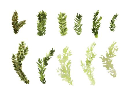 Watercolor collection of fir branches. Green and light green colors