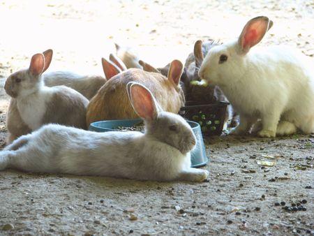 warren: Rabbit Warren Stock Photo
