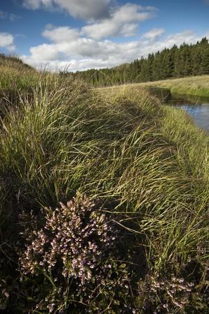 connemara: Peatlands in the county of Connemara, Ireland Stock Photo