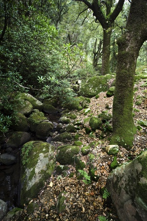 mediterranean forest: wet Natural landscape in the south of Spain