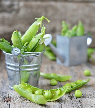 fresh, organic  green peas  photo