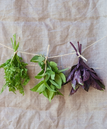 fresh,green basil mint parsley and chervil on textile background photo
