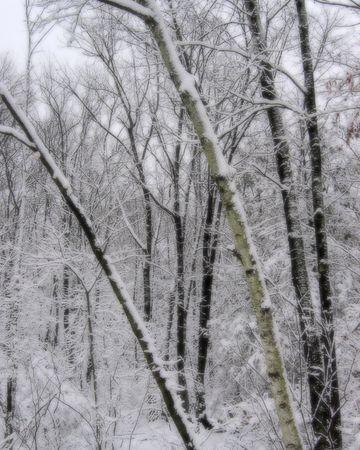 夢のような冬