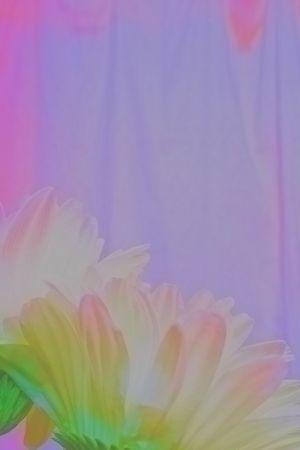 timidity: Translucent Daisies