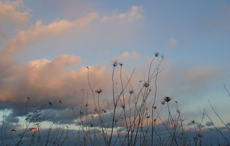 Queen Annes Lace in the wind in early winter photo