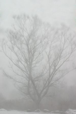hardly: Tree hardly visible as it is blown in blizzard winds Stock Photo