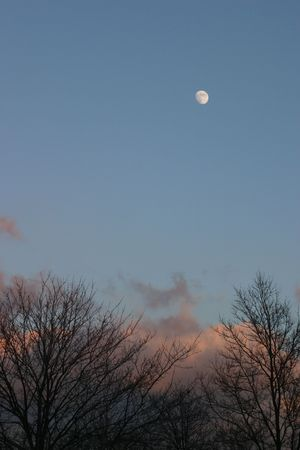 Wintry moon over bare trees