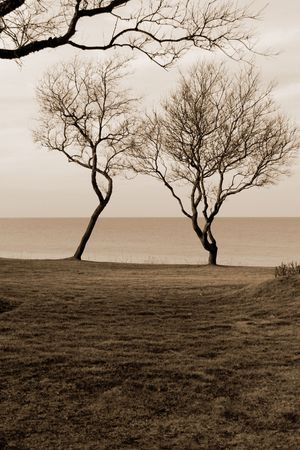 Two trees at the end of a lawn by the side of the ocean Reklamní fotografie