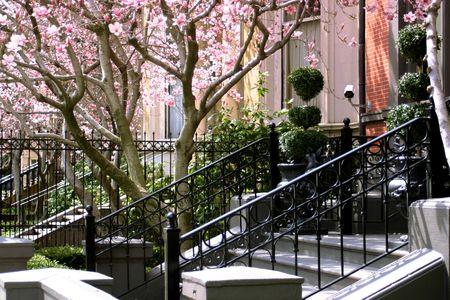 a typical Bostonian garden area