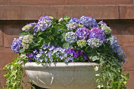 Bowl of blue hydrangeas in front of a stone wall Reklamní fotografie