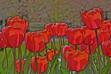 illustration of red tulips in the sun