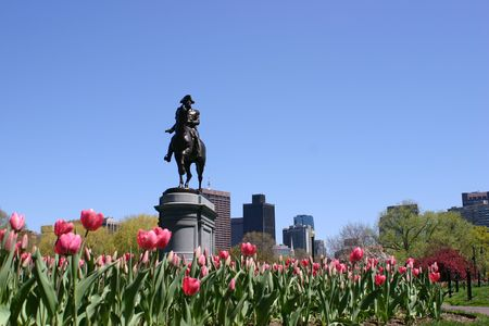 Pink tulips fill the foreground in front of a statue of George Washington in the Boston Public Garden while tall buildings fill the horizon. Banco de Imagens