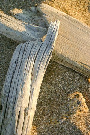 driftwood on the sand Stok Fotoğraf