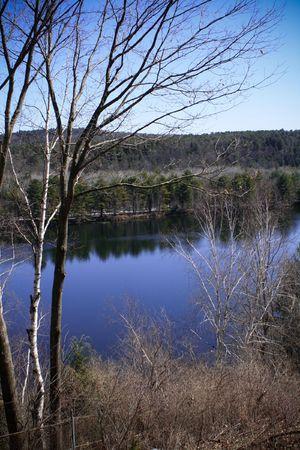 A bare birch tree by a lake Reklamní fotografie