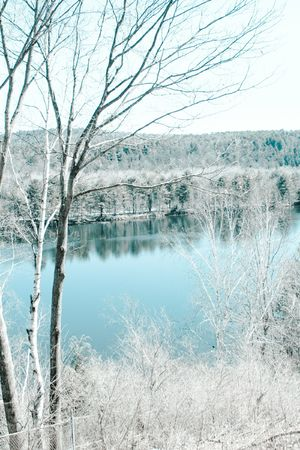 A wintry bare birch tree by a lake