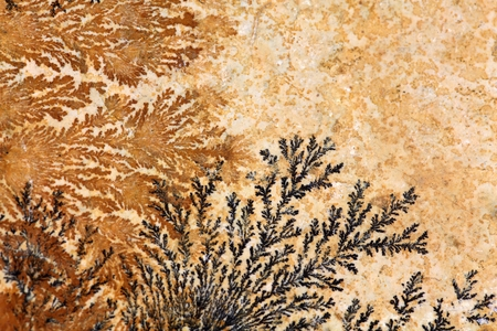 dendrite: Dendritic minerals (iron- and manganese oxides) on Solnhofen Limestone (Upper Jurassic of Southern Germany).