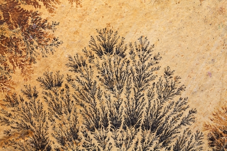 dendrites: Dendritic minerals (iron- and manganese oxides) on Solnhofen Limestone (Upper Jurassic of Southern Germany).