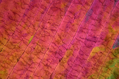 inorganic: Sulfur crystals under the microscope with a magnification of 100 times and in polarized light.