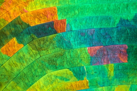 Sulfur crystals under the microscope with a magnification of 100 times and in polarized light.