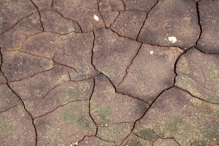 moorland: A mud surface with cracks in moorland as background.