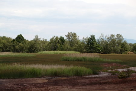 biotope: Wetland area with rushes and small trees.