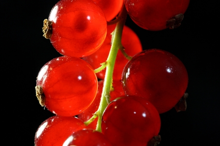 currants: A macro photography of red currants.