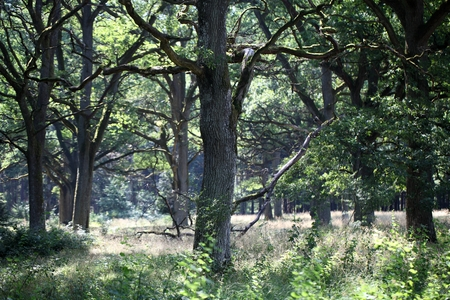oak trees: A historical wood pasture with oak trees in Southern Germany.