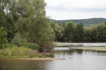 river main: The River Main near Bamberg in Southern Germany.