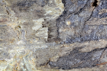 gondwana: Macro photo of the surface of fossil wood from the Lower Jurassic of Southern Germany.