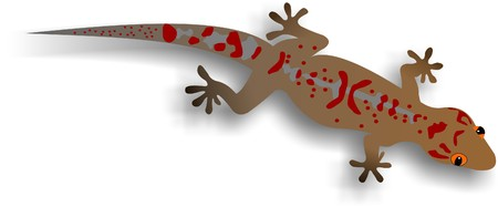 small reptiles: Illustration of an African House Gecko.