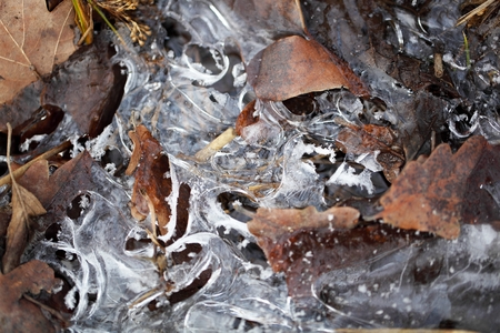 leafed: Ice covering a buddle and old leaves. Stock Photo